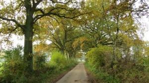 fall15-IMG_5155