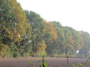 fall15-IMG_5175