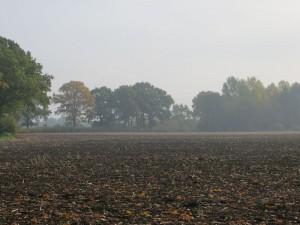 fall15-IMG_5179