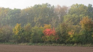 fall15-IMG_5180