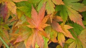 fall15-IMG_5214