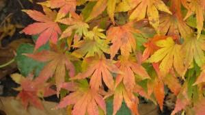 fall15-IMG_5219