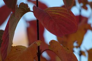 fall_IMGP1032