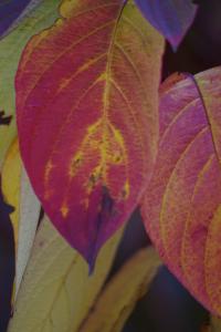 fall_IMGP1034