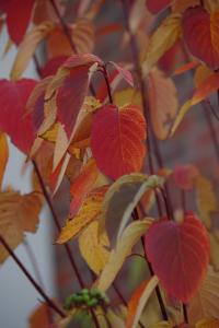 fall_IMGP1035