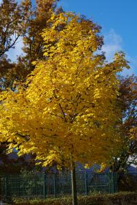 fall_IMGP1036