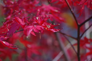 fall_IMGP1039