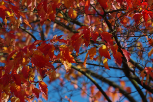 fall_IMGP1045
